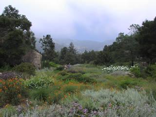 Santa Barbara Botanic Garden © Antandrus