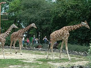 © Thüringer Zoopark Erfurt