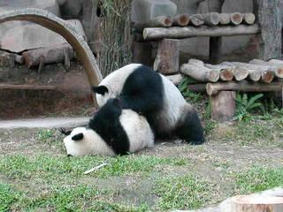 Chiang Mai Zoo © Love Krittaya