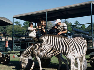 Badoca Safari Park © Badoca Safari Park