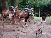 Tierpark Gera © Tierpark Gera