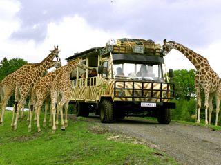 Safari im Serengeti Park © Serengeti Park