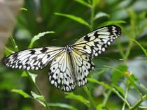 Schmetterlingshaus im Maximilianpark