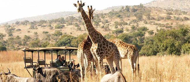 Ausflugsziele und Attraktionen in Südafrika